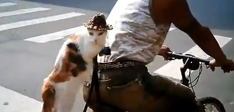 Cat Sitting On A Bicycle