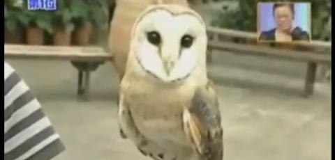 Amazing Owl Changing Shape