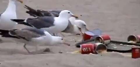 Kids Feed Seagulls With Laxatives Added In The Food