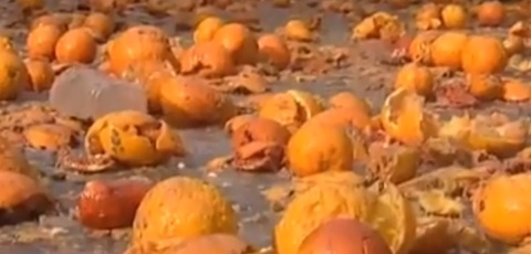 Crazy Food Fight With Oranges In Italy