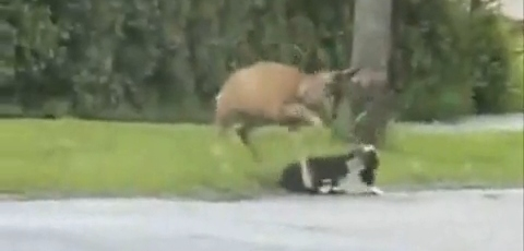 Dog Gets Beat Up By Deer