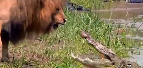 Footages of The Best Animal Fights