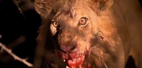 World's Deadliest Animals From Africa