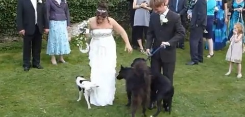 Funny Wedding Fail Moments